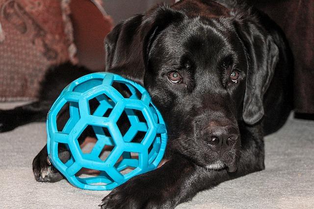 dog toys photo
