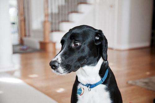 dog collar photo