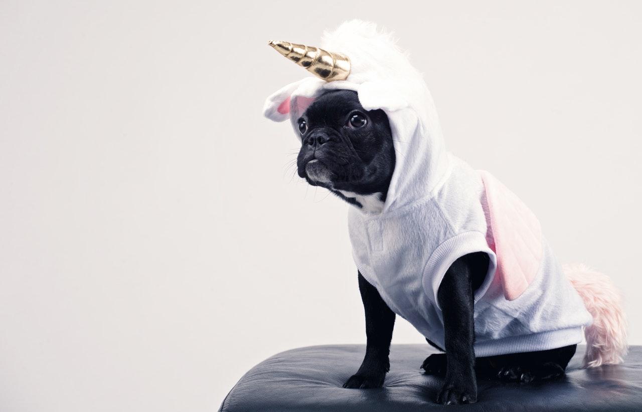 Hund i enhjørninge kostume