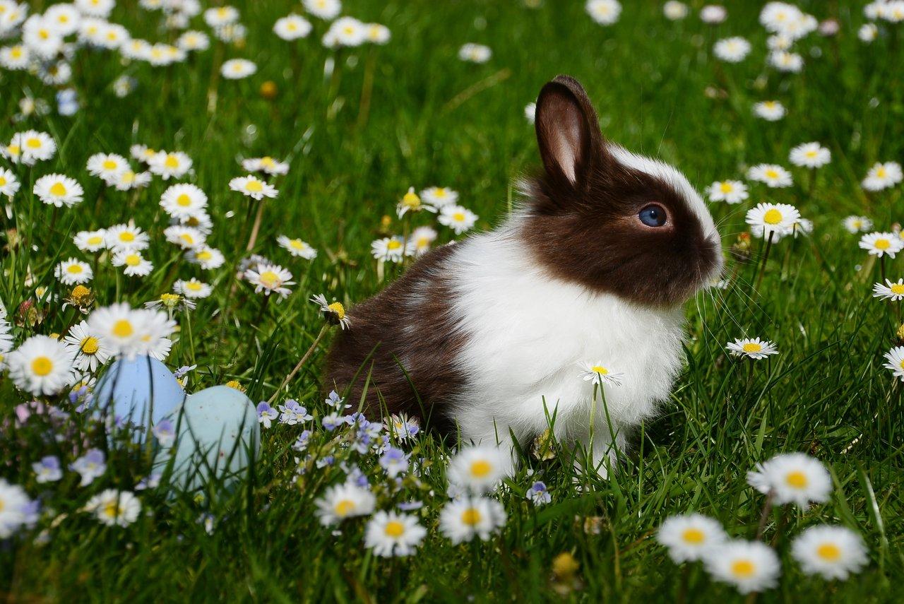 kanin sidder imellem blomster